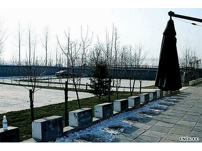 CNCC中国松狮俱乐部地址电话帐号25925纯种松狮犬舍