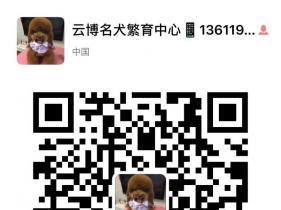 上海云博名犬繁育中心出售纯种柴犬包健康图片