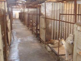 云南哪里能买到纯种哈士奇才 哪有大型犬场图片
